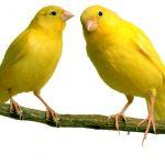 Tafsir Mimpi Togel Lengkap Tentang Burung
